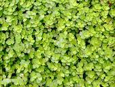 Zelené listy — Stock fotografie