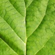 Stock Photo: Green leave