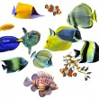 Group of fishes — Stock Photo #4043421