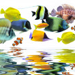 Group of fishes — Foto de Stock
