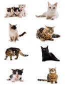 Cats in studio — Stock Photo