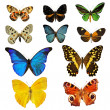 Colorfull butterfly — Stock Photo