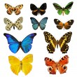 Stock Photo: Colorfull butterfly