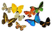 Group of butterfly — Stock Photo