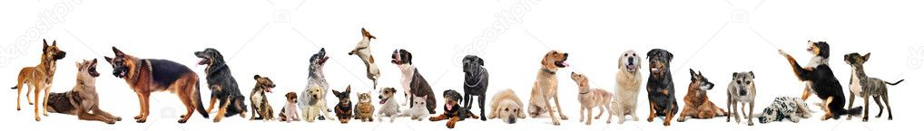 Group of dogs, puppies and cats on a white background  Stock Photo #4593409