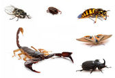 Brown scorpion and insects — Stock Photo