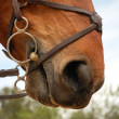 Stock Photo: Horse bridle