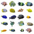Group of fishes — Stock Photo #5153269