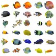 Fishes — Foto de Stock