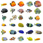 Fishes — Stock Photo