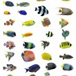 Fishes - Stock Photo