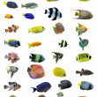 Fishes — Stock Photo #5193874