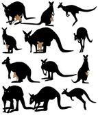 Silhouette kangaroo — Stock Vector