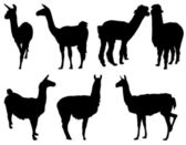 Lama silhouette — Stock Vector