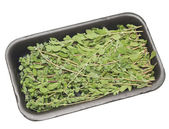 Tray of thyme — Stock Photo