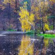 Royalty-Free Stock Photo: Autumn lake in golden forest