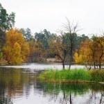 如诗如画的秋景的湖和明亮的树木和灌木 — 图库照片