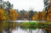 Pitoresca paisagem de outono do lago e brilhantes árvores e arbustos — Fotografia Stock