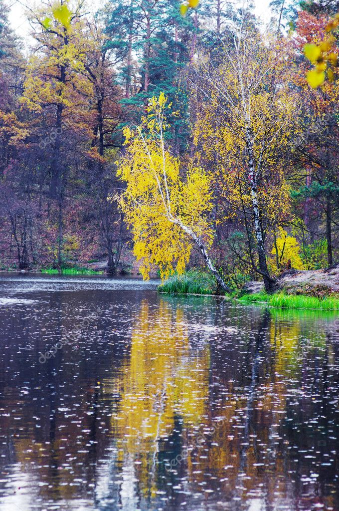 Autumn lake in golden forest — Stock Photo #4133134