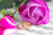 Wedding rings and pink roses — Stock Photo