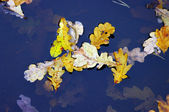 Colorful foliage floating in the dark fall water — Stock Photo