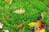 Yellow oak leaf on green grass autumn background — Stock Photo