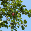 Red apples and leaves on blue sky — Stock Photo