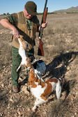 Pointer and brittany hunting dogs retrieving a hare — Stock Photo