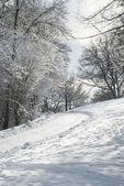 Kış iz — Stok fotoğraf
