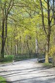 Spring Path the Country Bridge — Stock Photo