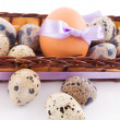 Quail and chicken eggs in basket — Stok fotoğraf