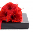 Black gift box with red flowers — Stock Photo