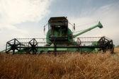 Harvesting Wheat For Profit — Stock Photo