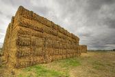 Balar hö på jordbruksmark 4 — Stockfoto
