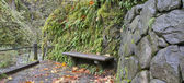 Stone Bench on Oneonta Gorge Trail Panorama — Stock Photo