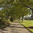 Tree Lined Walking Path - Stock Photo