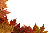 Red Autumn Maple Leaves Background 2 — Stock Photo