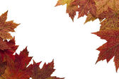 Red Autumn Maple Leaves Background 3 — Stock Photo