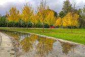 Reflection of Fall Season at the Park — Stock Photo