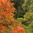 Stock Photo: Fall Season at Japanese Garden