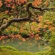 Stock Photo: Fall Season at Japanese Garden 2
