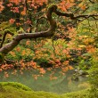 Fall Season at Japanese Garden 2 — Stock Photo