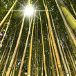 Bamboo Forest Perspective — Stock Photo