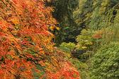 Val seizoen op Japanse tuin — Stockfoto