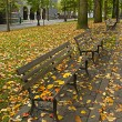 Stock Photo: Fall Leaves on Benches Along Park 2