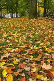 Jesienią liście na trawa trawnik w parku — Zdjęcie stockowe