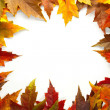 Stock Photo: Maple Leaves Mixed Fall Colors Border 2