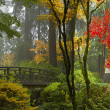 Stock Photo: Wooden Bridge at Japanese Garden in Autumn Panorama