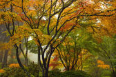 Korony drzew japoński klon w jesieni 2 — Zdjęcie stockowe