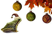Christmas Tree Frog Sitting with Red Maple Leaves — Stock Photo